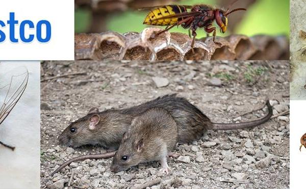Pestco Pest Control