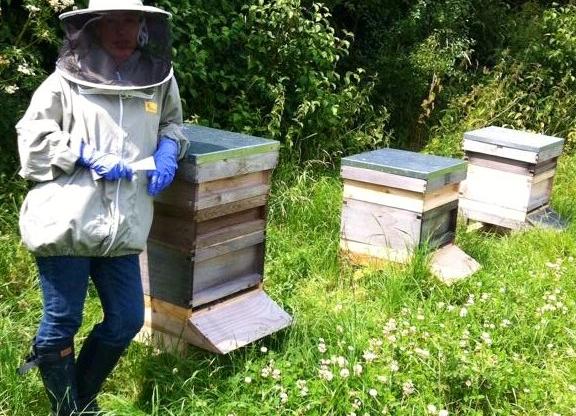 Beekeeping in October