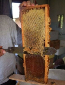 Honey-Harvest-230x300