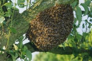 Swarm3-300x201