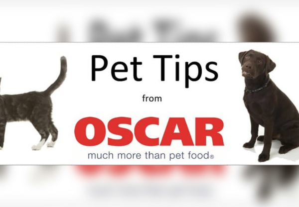 Keep your pets healthy and calm these holidays
