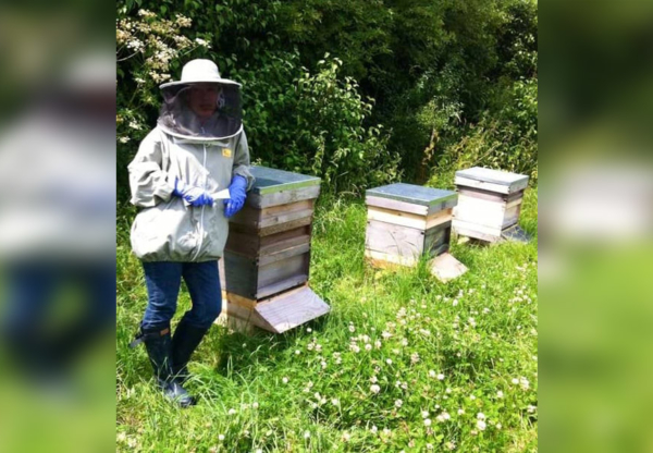 Beekeeping in April