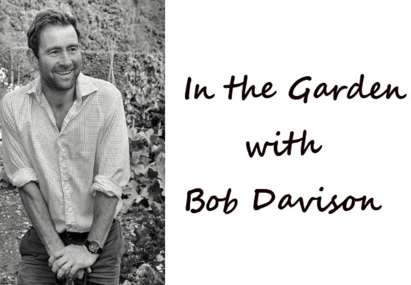 September in the Garden with Bob Davison
