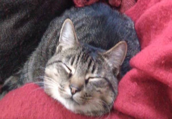 My Cat Diary by Nimbus – Week 5