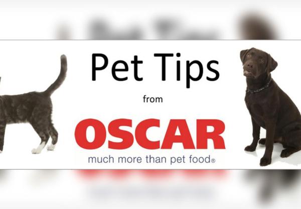 Cat Feeding Tips – from Oscar Pet Foods