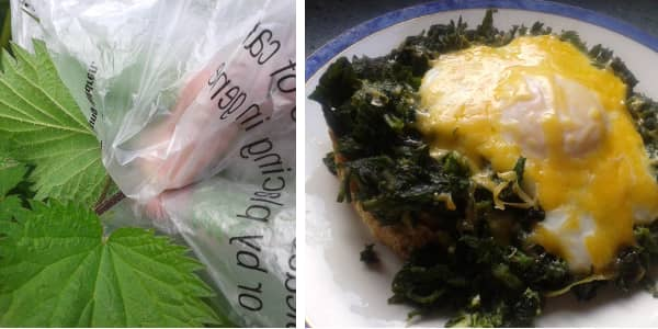 How to Pick and Cook with Nettles