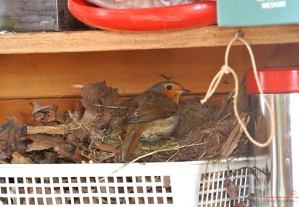 Squatting Robin Family