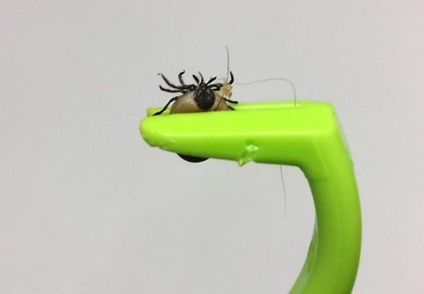 Lyme Disease: Be Tick-Aware