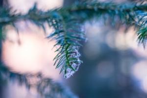 Christmas Tree Sale @ The Nature Discovery Centre | England | United Kingdom