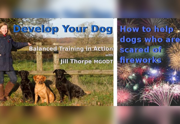 10 Top Tips to Help Dogs Scared of Fireworks