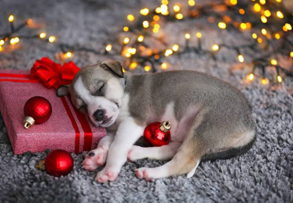 Let Eclipse Cleaning take the stress out of Christmas
