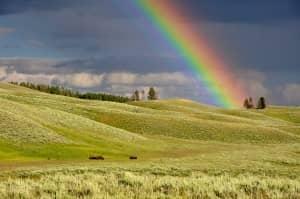 The Rainbow Run @ Cutteslowe Park, Oxford | England | United Kingdom