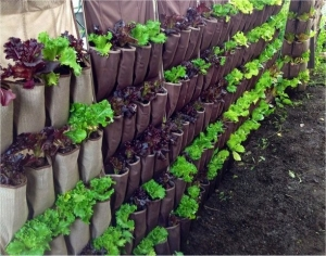 Vertical Gardening @ The Mix Community Space |  |  |