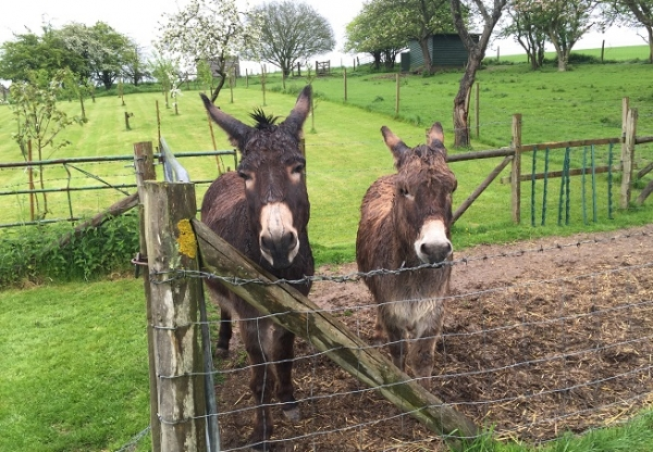 Rescue Donkeys in Lambourn