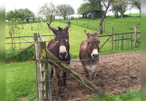 Rescue Donkeys in Lambourn