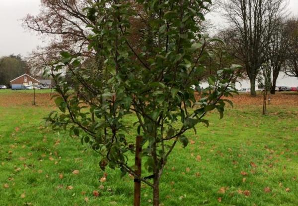 Help Marlborough Community Orchard