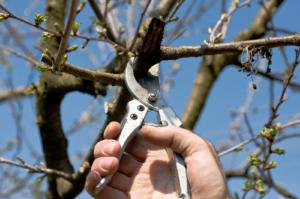 Winter Top Fruit Pruning Workshop