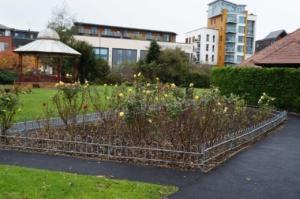 Rose bed planting in Victoria Park @ Victoria Park, Newbury