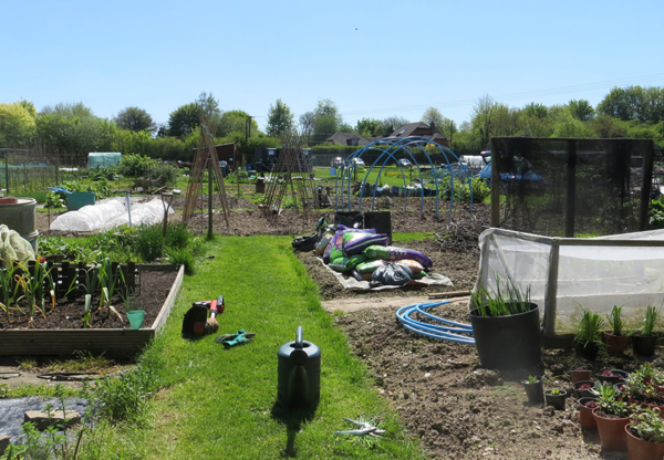 May – a great month for veg gardening