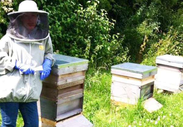 Beekeeping in May