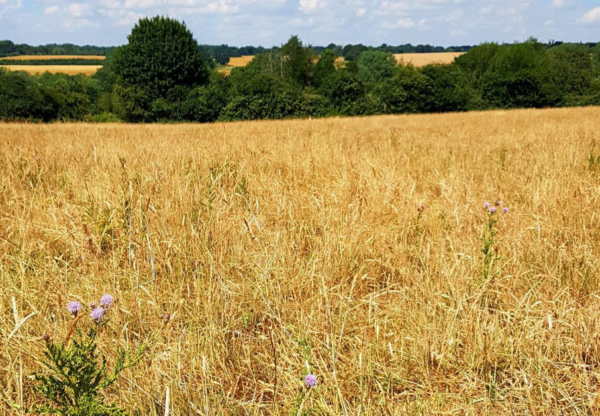 Drought, Barbecues and Hungerford Common