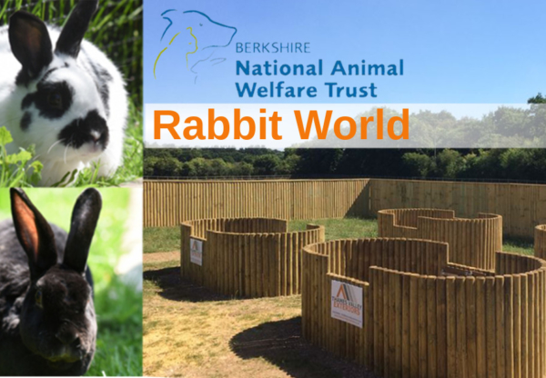 Can you support a new Rabbit World at Trindledown Animal Welfare Farm?