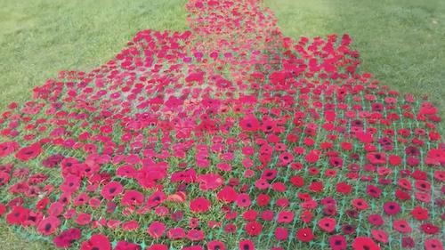 2018 Remembrance Poppy Video