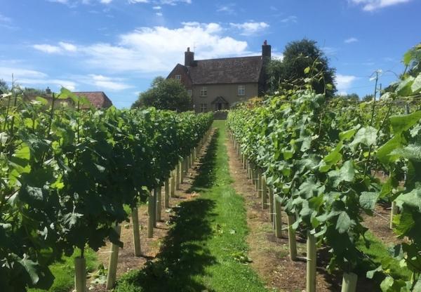 Winding Wood Vineyard