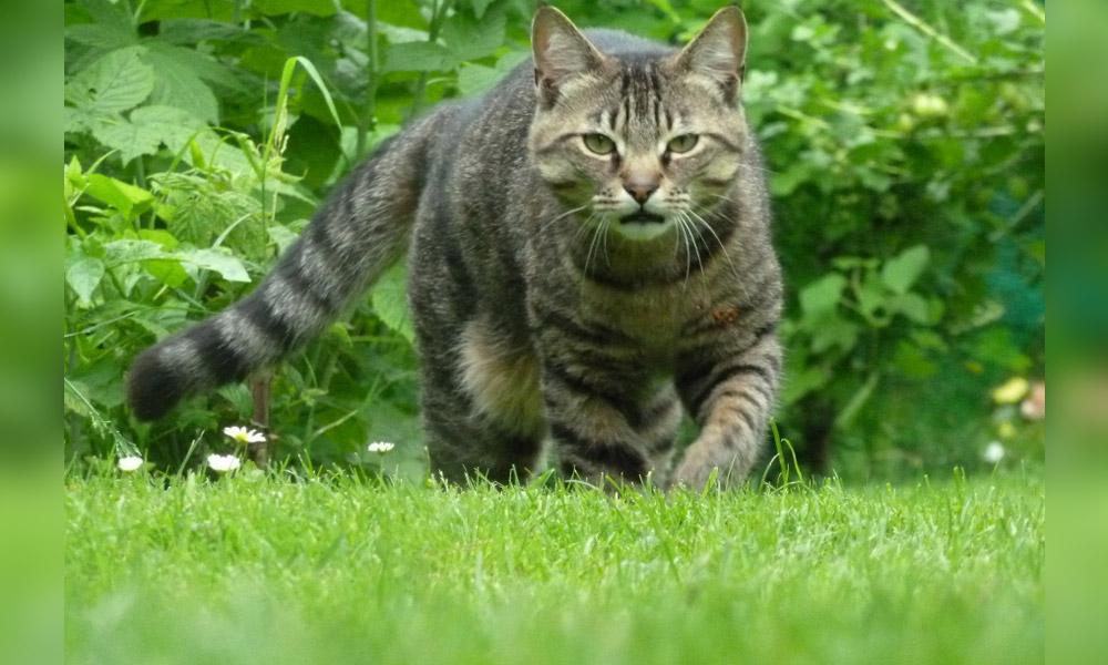 Nimbus prowling