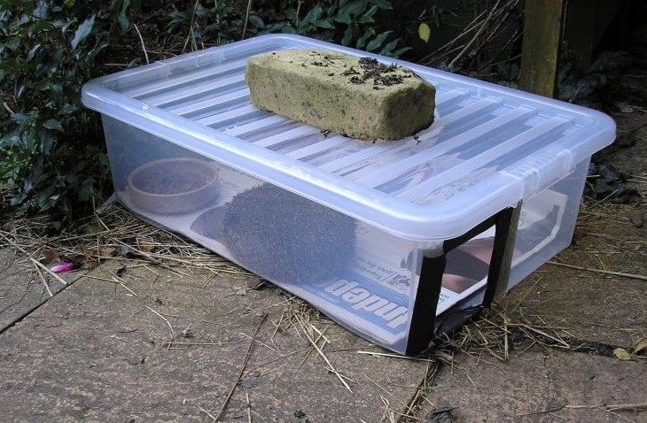 Hedgehog feeder