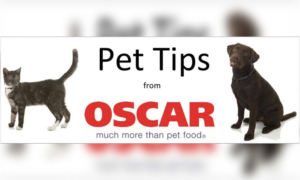 Pet Tips from Oscar