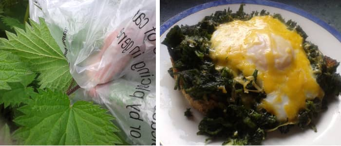 Nettle recipe FI