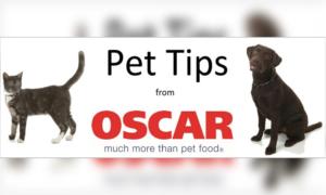 Pet Tips FI