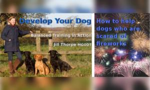develop-your-dog-fireworks