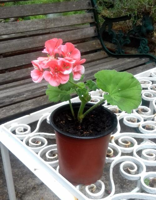 It will soon flourish and flower