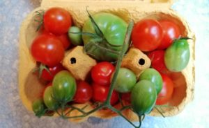 Gardening - how to ripen green tomatoes