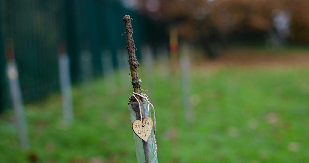 HPS-19-TreePlanting-30