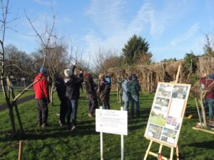 Community Pruning Digby Road