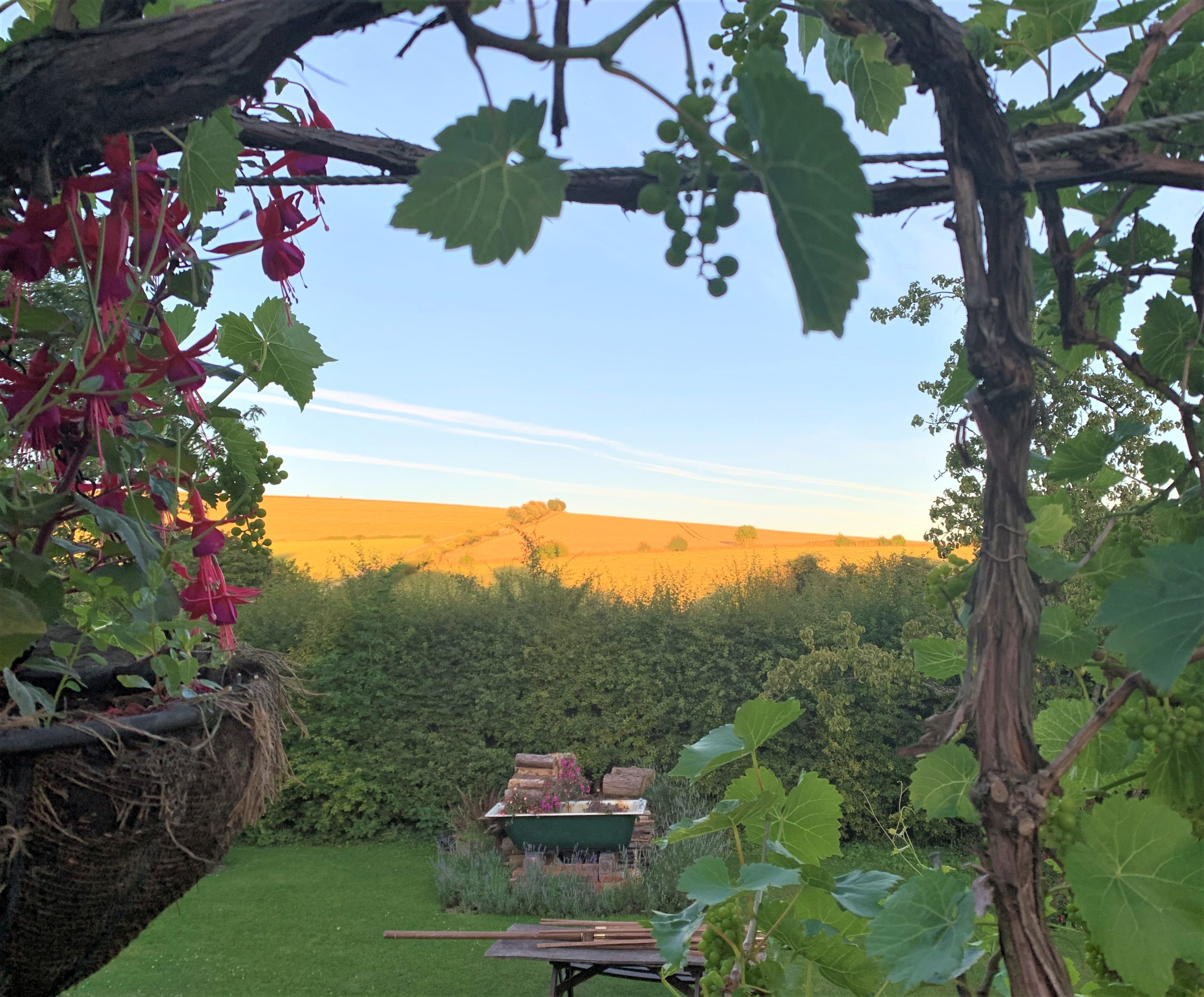 Sunset through vine window