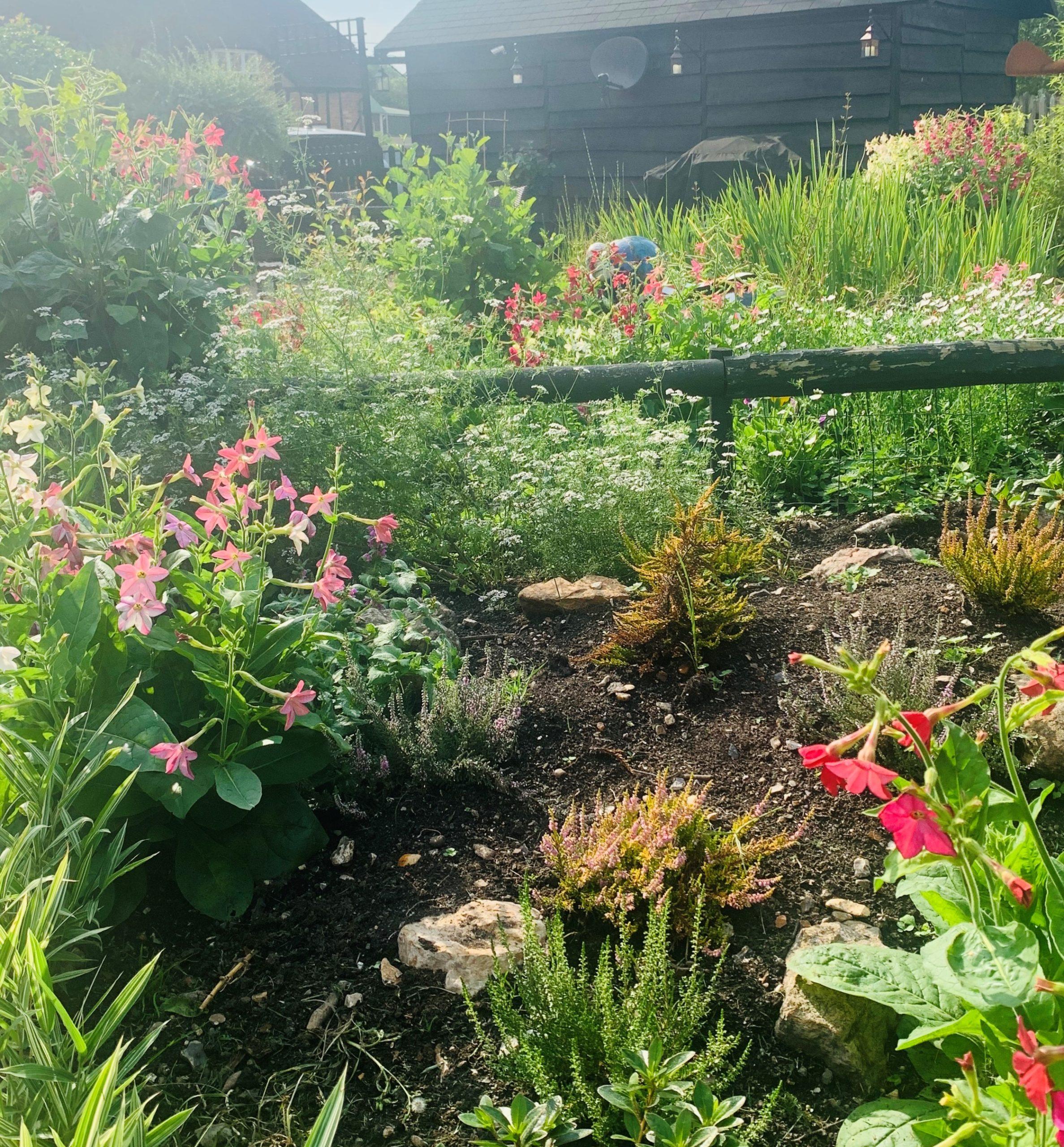 Garden Georgie 1 crop