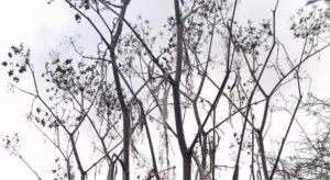 fennel stalks illustrating winter wildlife-friendly gardening tips