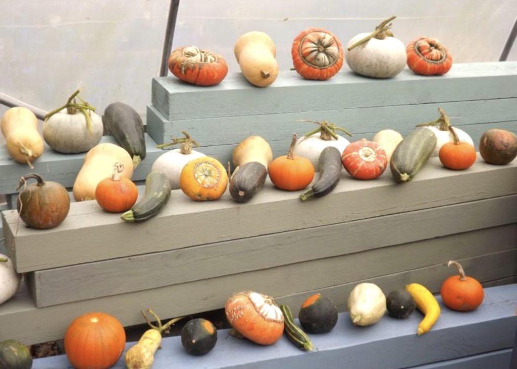 squash and pumpkin Wantage Market Garden